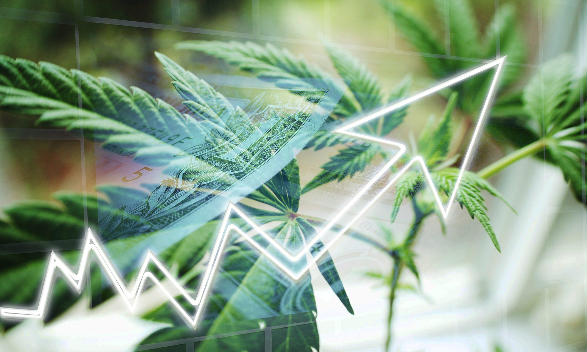 #medcannabis #stock #ivnestors